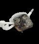 Headphone holder Natural phyton